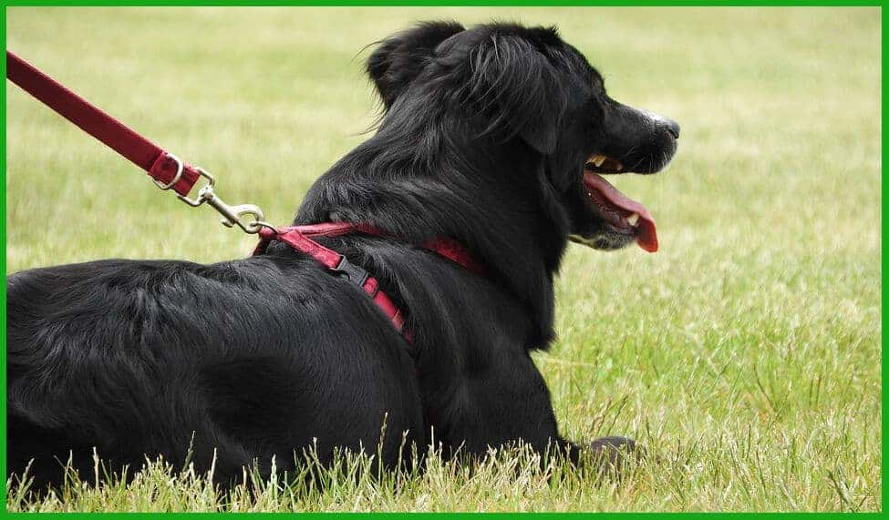 best dog harness black friday deals