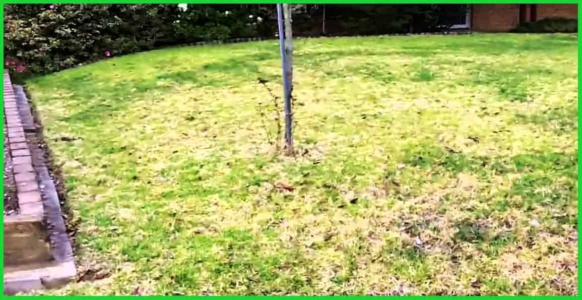 lawn problems and their solutions