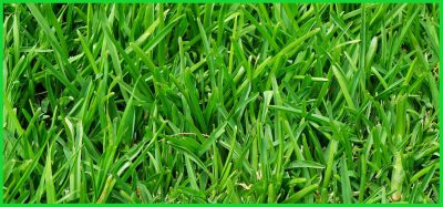 how to maintain a healthy lawn