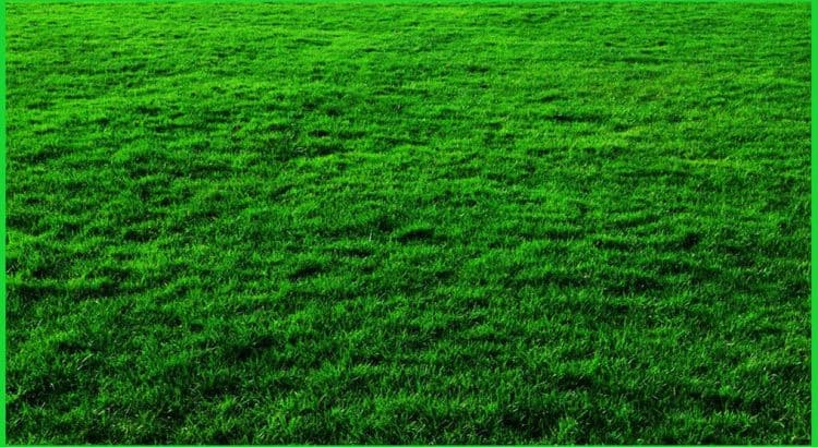 how to keep your lawn fresh and beautiful in all four seasons